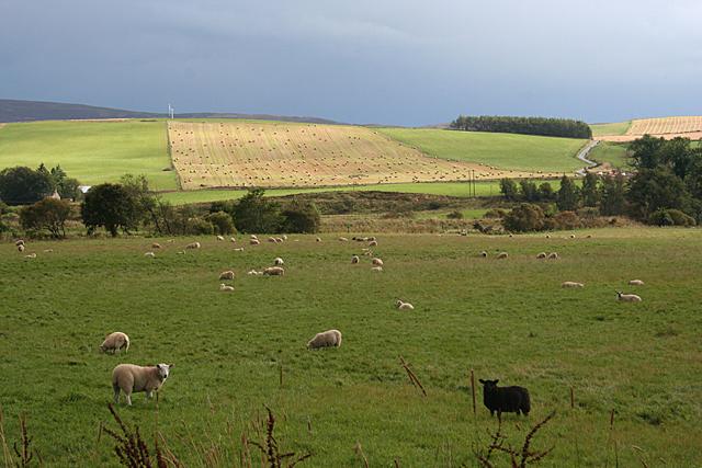 Fields near Towie