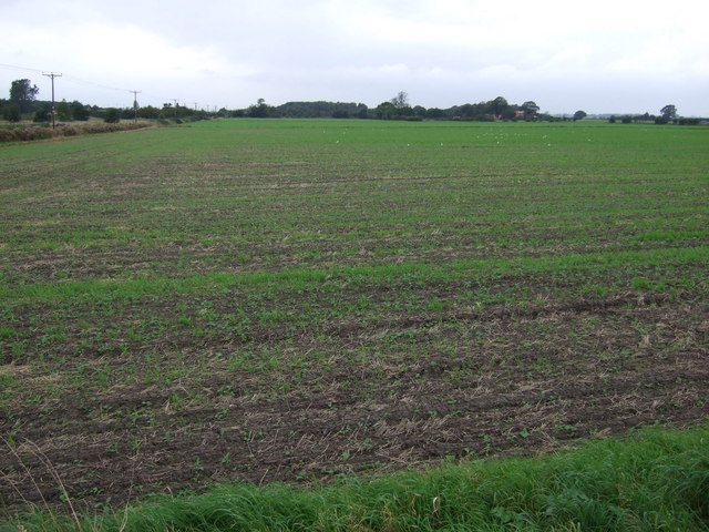Farmland west of North Moor Lane