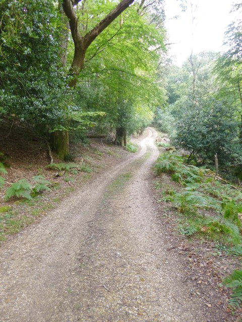 Godshill Wood, forestry road
