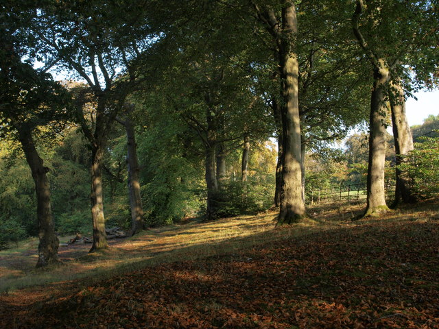 Cathkin Braes woodland