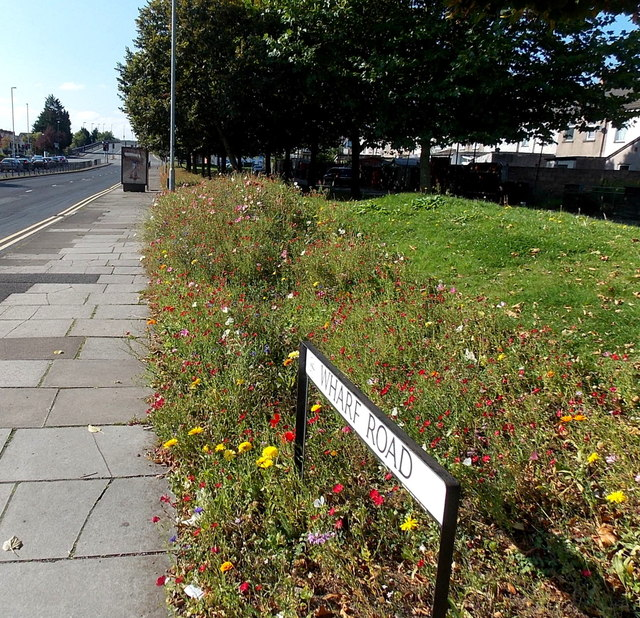 Colourful flowers at the edge of Wharf Road, Newport