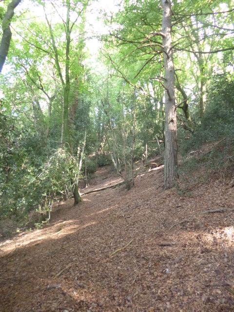Castle Hill, hillside