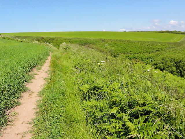 Coast Path along the Field Edge