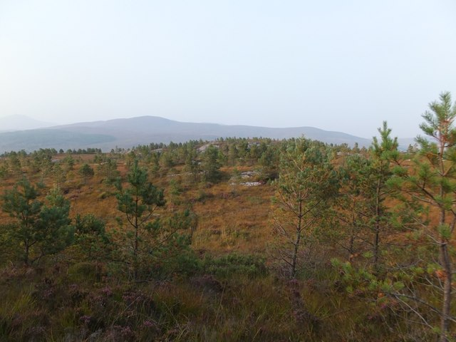 Rocky outcrop in young pine plantation