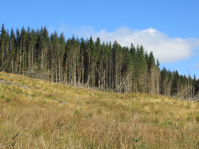 Forestry, Mid Argyll