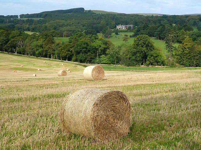 A stubble field with round bales on the Bowland Estate