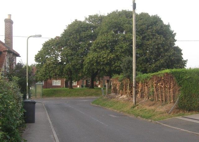 Severe hedge cutting