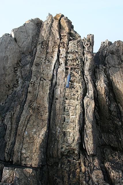 Natural Ladder