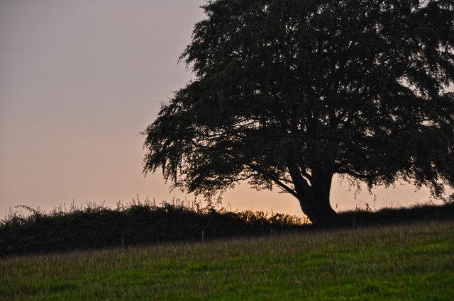West Somerset : Grassy Field & Tree