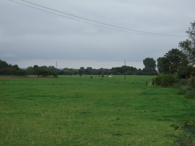 Grazing off Brigg Road