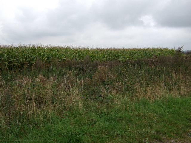 Crop field off Sand Lane