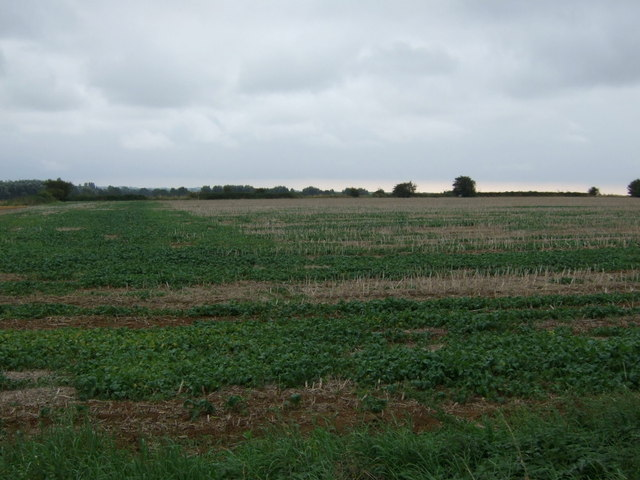 Crop field, Low Farm
