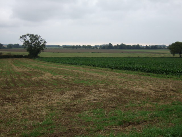 Stubble and crop fields