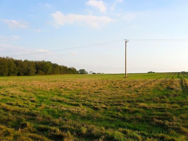 Willow Field