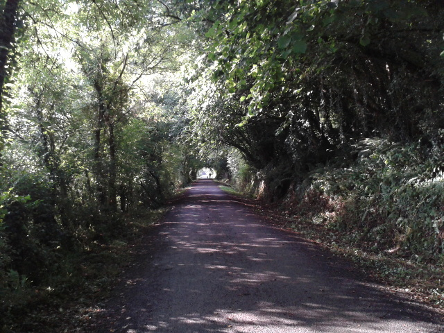 The Camel Trail cycle and walking route