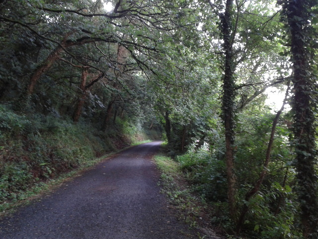 The Camel Trail heading south-east
