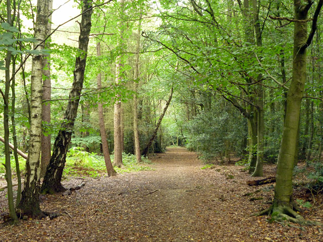 Path in Philipshill Wood