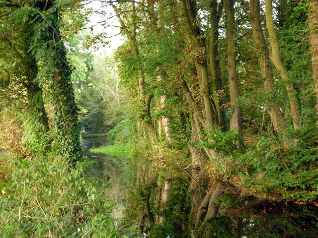 Wendover Arm near Halton