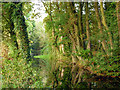 SP8610 : Wendover Arm near Halton : Week 38