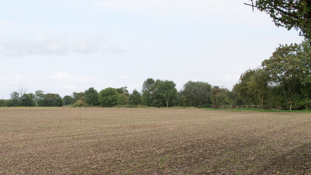 Tilled field near Knowle's Farm, Hatfield Peverel