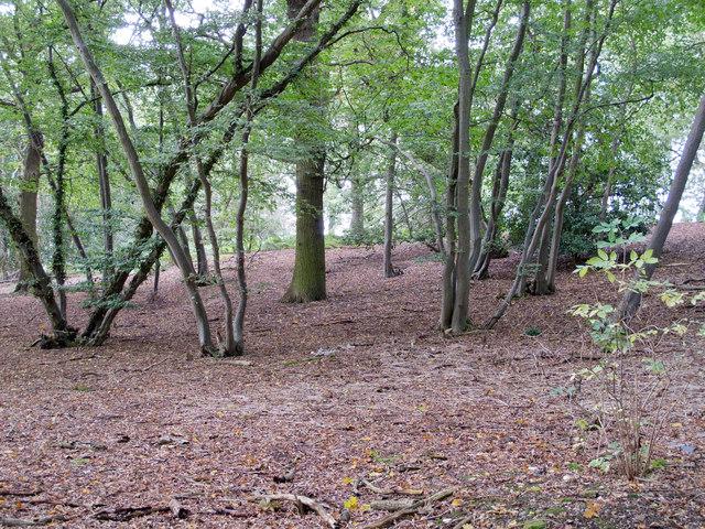 Wood near Mope Grove, Wickham Bishops