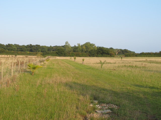 Grassland off Maypole Road, Great Totham