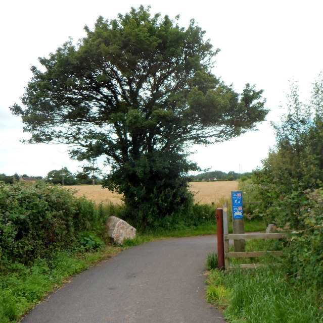 Tree at a bend in Festival Way, Flax Bourton