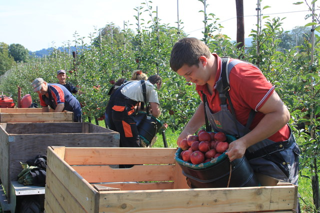 Apple picking at Sargent's farm in September 2014