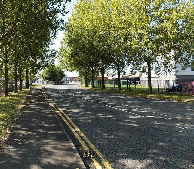 Tree-lined section of Frederick Street, Newport