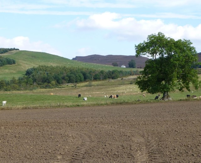 Arable field with sheep and cattle beyond