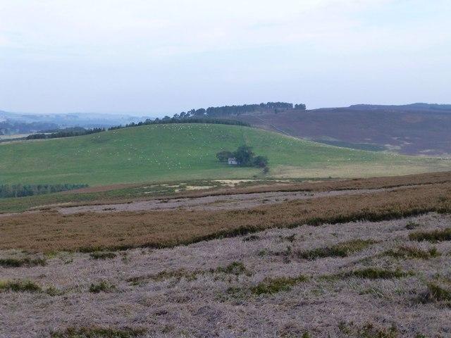 Mowed heather on Cartington Hill