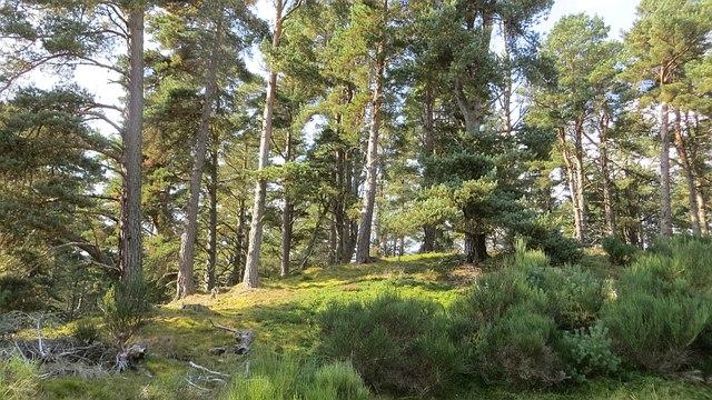 Forest near Loch Vaa