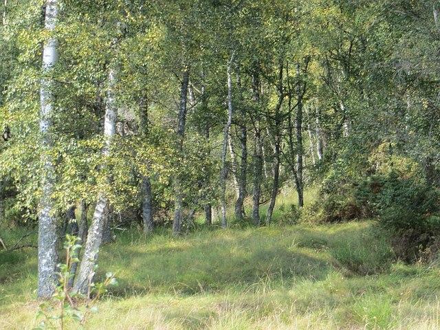 Birchwoods, Drumuillie