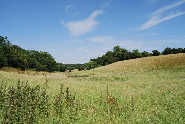 Vale near Cox's Wood