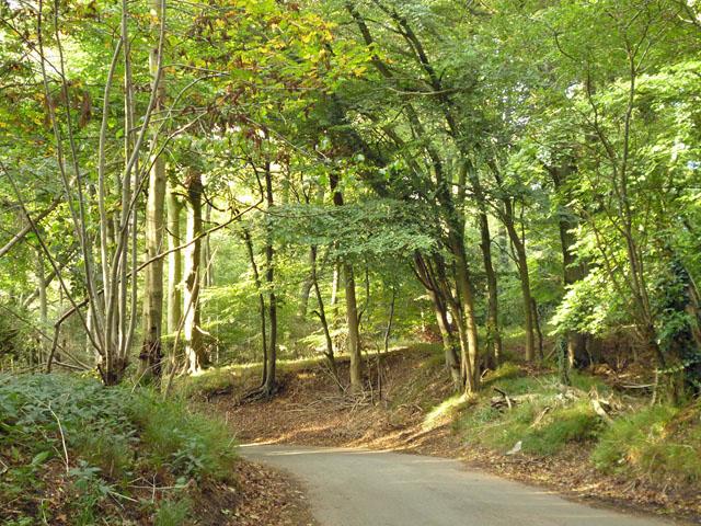 Hale Lane in Hale Wood