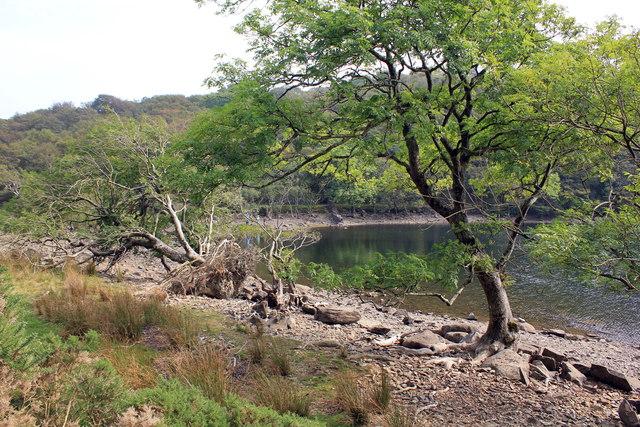 The banks of Llyn Cynwch