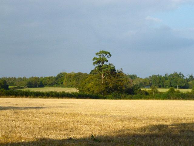 Stubble field near St. Leonards