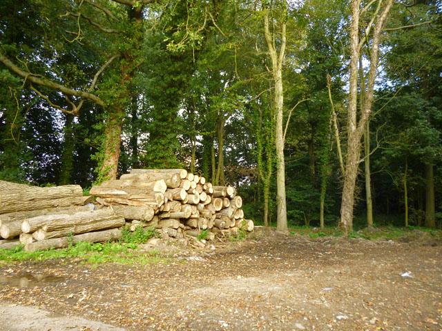 Logs by the lane