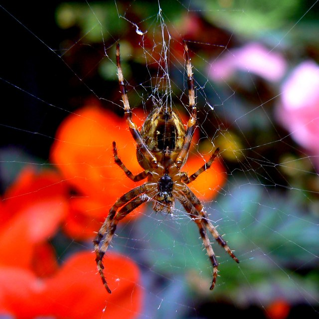 Spider, Town Gardens, Swindon