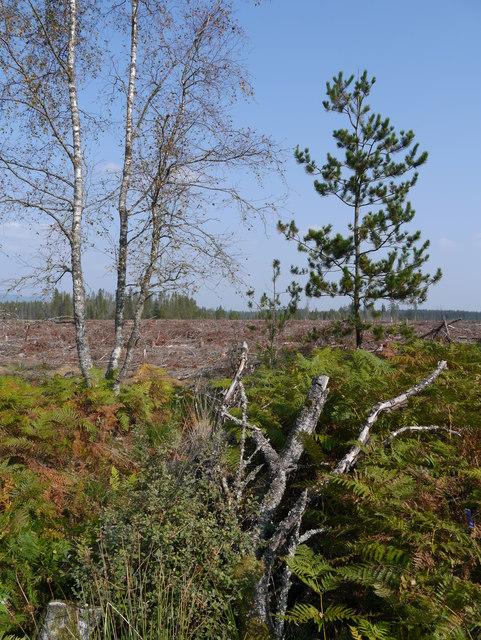 Trackside Vegetation