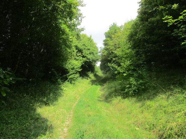 Butt Lane Hollow