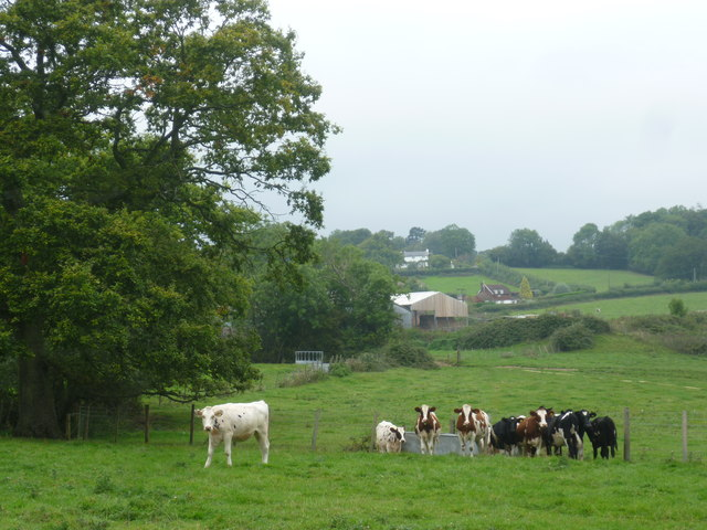 Cattle at Horseshoe Green Farm