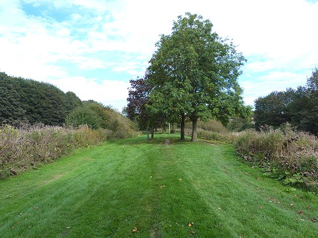 Border Abbeys Way east of Hawick