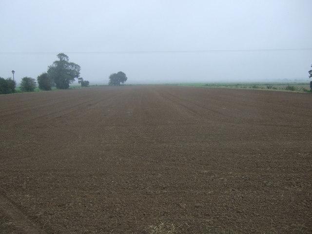 Farmland, Mesingham Ings