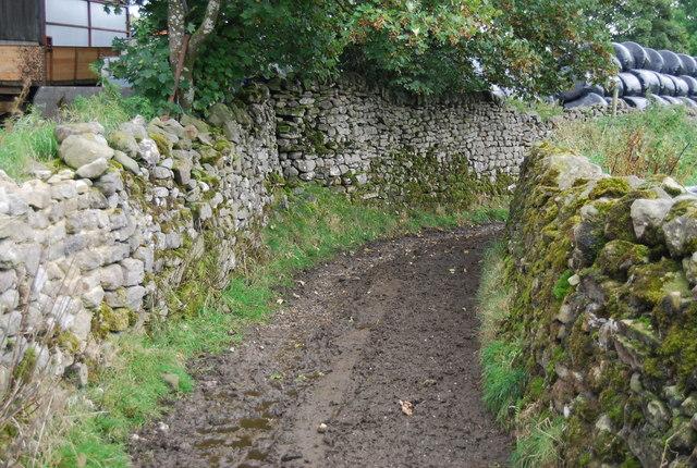 Muddy Back Lane