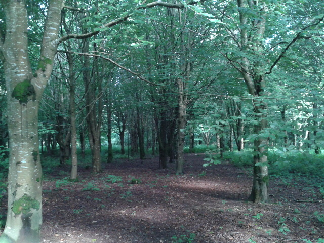 Woods near Lanhydrock House