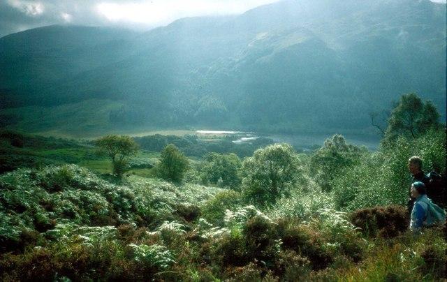 Open woodland above Loch Trool