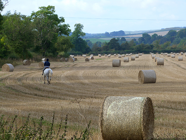 Horse rider and field of bales
