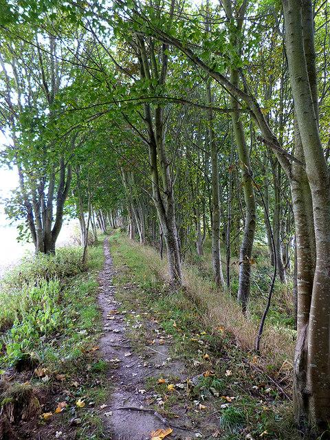 Border Abbeys Way above Denholm