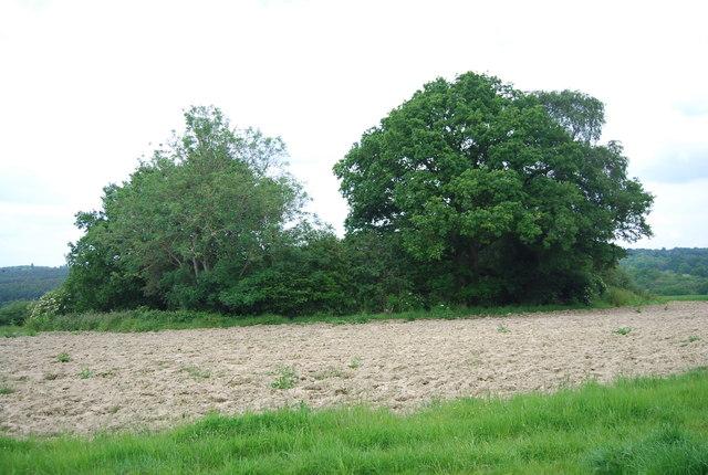 Small woodland, Great Cansiron Farm